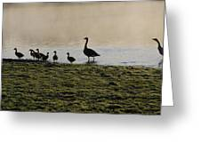 Duck Family Panorama Greeting Card by Bill Cannon