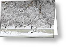 Duck Fly Over Herons On Maumee River Greeting Card