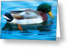 Duck Glide Greeting Card