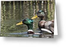 Duck Good Friends 1 Greeting Card