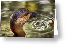 Duck Having Fun Greeting Card