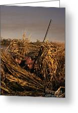Duck Hunter In Blind Greeting Card by Ron Sanford