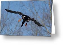 Duck In Flight Greeting Card