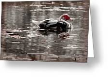 Duck In Lake  Greeting Card