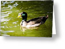 Duck In The Park Greeting Card