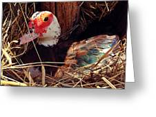 Duck In The Roost Greeting Card