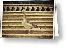 Duck In The Stair Greeting Card