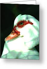 Duck Greeting Card by Jennifer Burley
