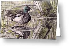 Duck Of Pond Greeting Card