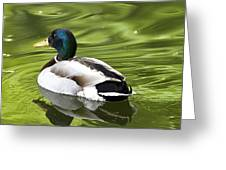 Duck On A Green Pond Greeting Card by Tony Reddington