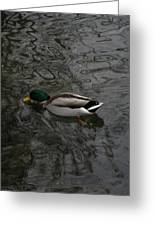 Duck On A River Greeting Card