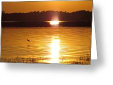 Duck On Sunset Greeting Card