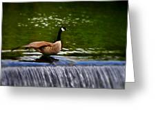 Duck On The River Wye Waterfall - In Bakewell Peak District - England Greeting Card