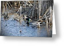Duck Paddle Greeting Card