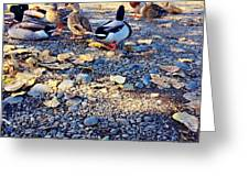 Duck Parade On The Beach Greeting Card