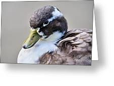 Duck Portrait Greeting Card