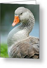 Duck Pose Greeting Card