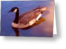 Duck Swimming Greeting Card