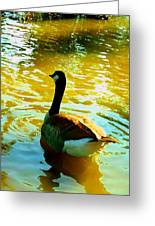 Duck Swimming Away Greeting Card