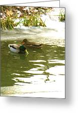 Duck Swimming In A Frozen Lake Greeting Card