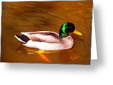 Duck Swimming On Golden Pond Greeting Card