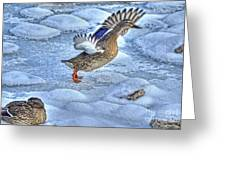 Duck Take-off Greeting Card