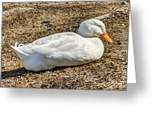 Duck Taking A Nap Greeting Card