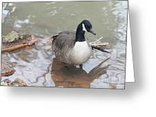 Duck Wading In A Stream Greeting Card