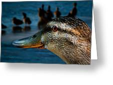 Duck Watching Ducks Greeting Card