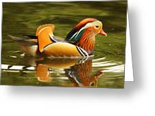 Duck Wild - Mandarin Greeting Card by DerekTXFactor Creative