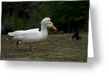 Duck With Stylish Hair Greeting Card