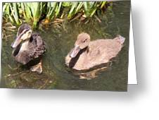 Duckies In The Pond Greeting Card