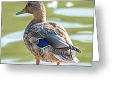 Duckling By The Lake  Greeting Card