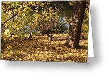 Ducklings In Sunshine Greeting Card