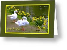 Ducks And Daffodils Greeting Greeting Card