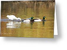 Ducks And Egret Greeting Card