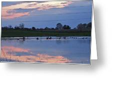 Ducks And Geese At Sunset Greeting Card
