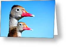 Ducks At Attention Greeting Card
