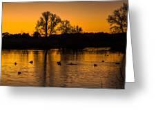 Ducks At Sunrise On Golden Lake Nature Fine Photography Print  Greeting Card