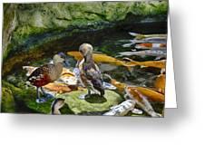 Ducks At The Koi Pond Greeting Card