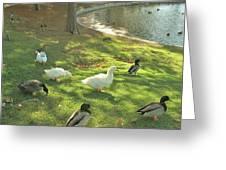 Ducks At The Park Greeting Card