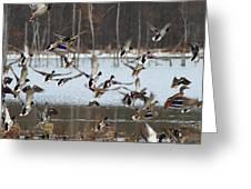 Ducks Away Greeting Card