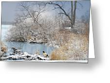 Ducks By The Pond Greeting Card