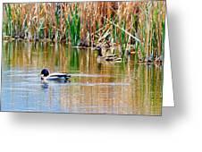 Ducks In A Marsh Greeting Card