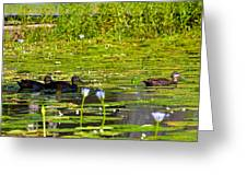 Ducks In Lily Pond Greeting Card