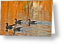 Ducks In The Fall Greeting Card