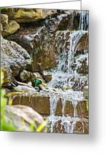 Ducks In The Falls Greeting Card