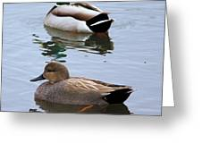 Ducks On A Pond Greeting Card