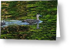 Ducks On Green Reflections - Panorama Greeting Card