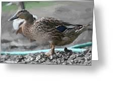 Ducks Wild Greeting Card